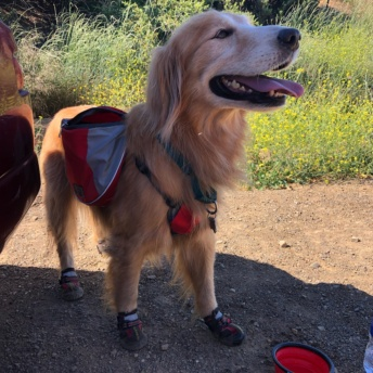 Odie camping and hiking