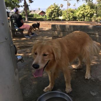 Odie at the dog park in Santa Monica