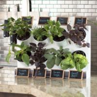 Watex indoor green plants