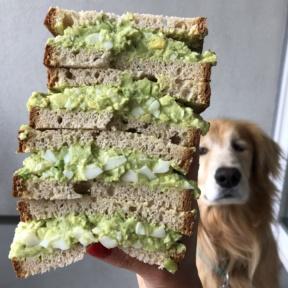 Odie wants the Avocado Egg Salad Sandwich too!